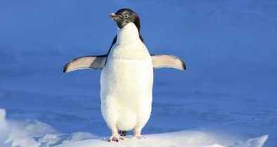 Al Gore Endorses a Penguin for Congress 1