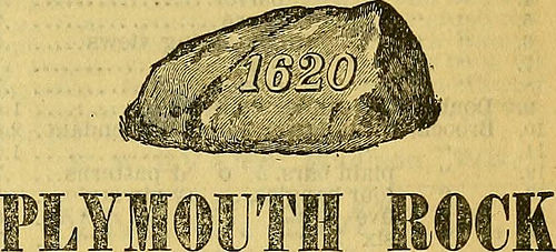 Plymouth Rock Pilgrims photo