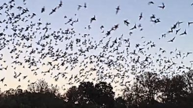 CNN Blames Coronavirus on Humans for Destroying Bat Habitats