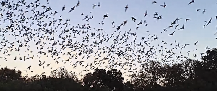 CNN Blames Coronavirus on Humans for Destroying Bat Habitats