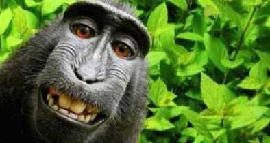 Court Tells PETA Wackos That Monkey Doesn't Own Selfie Copyright