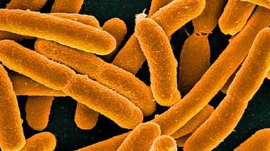 Feds Investigating Multi-state E. Coli Outbreak 1