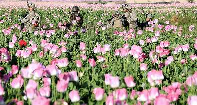 GOP Lawmaker: U.S. Won't Spray Opium in Afghanistan Because Crops 'Might Be Too Close to a Mosque'