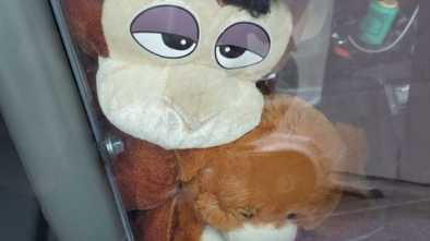 North Carolina Police Department Apologizes for 'Racist' Stuffed Monkey