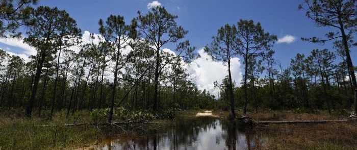 Trump Admin Reverses Obama-Era 'Wetlands' Grab of Ditches, Potholes 1