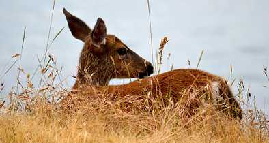 'Zombie' Disease Killing Deer Could Spread to Humans